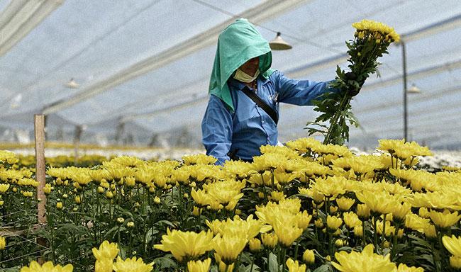 Iniciación de la promoción en la zona de floricultura en Cundinamarca.